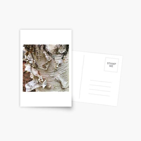 Peeling Bark Postcard