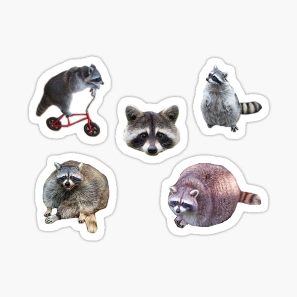 Raccoon Pack Sticker