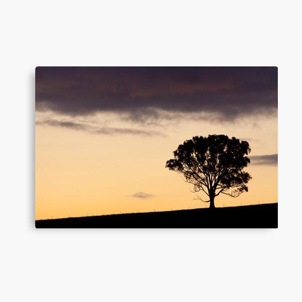Ridgetop Tree Canvas Print