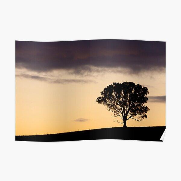 Ridgetop Tree Poster