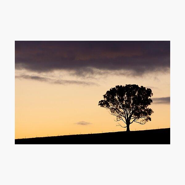 Ridgetop Tree Photographic Print