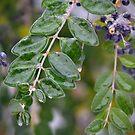 Ice Storm Berries by Kate Farkas