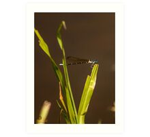 Dragonfly over muddy waters Art Print