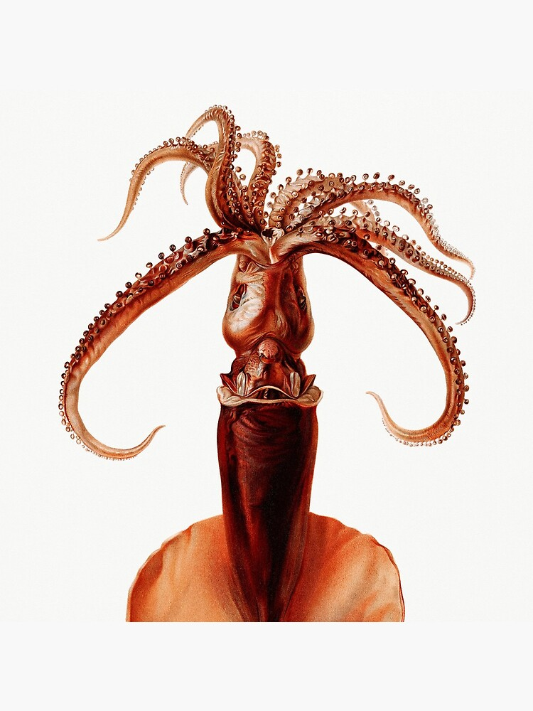 Marine Life- Squid illustration by webcaff-design