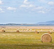 Hay Bales by Will Hore-Lacy