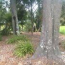 Beating trees by frnkmurray