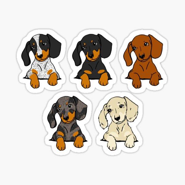 Paquete de pegatinas en crema de perro salchicha de todas las razas Pegatina