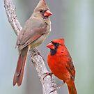 My Cardinal Neighbors by Bonnie T.  Barry