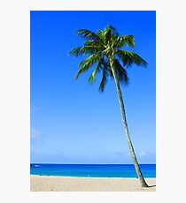 Palm Tree, Waimea Bay, Oahu, Hawaii Photographic Print