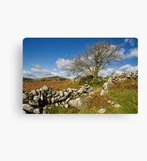 Lone tree on Dartmoor Canvas Print