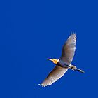 The graceful Cattle Egret. by Peter Doré