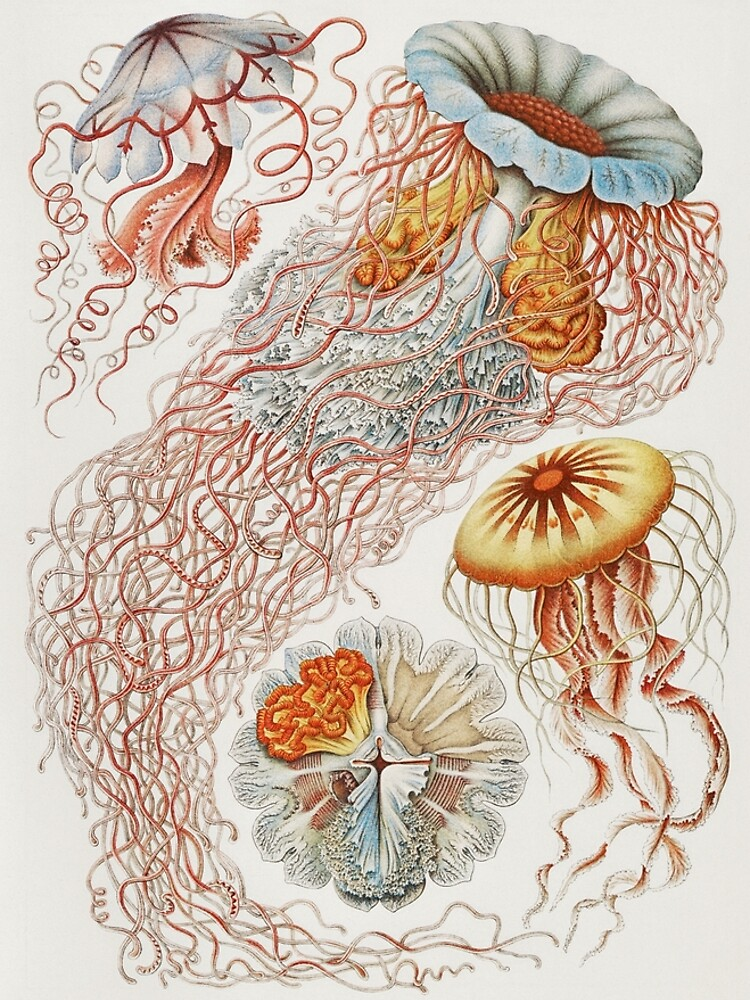 Marine Life by webcaff-design