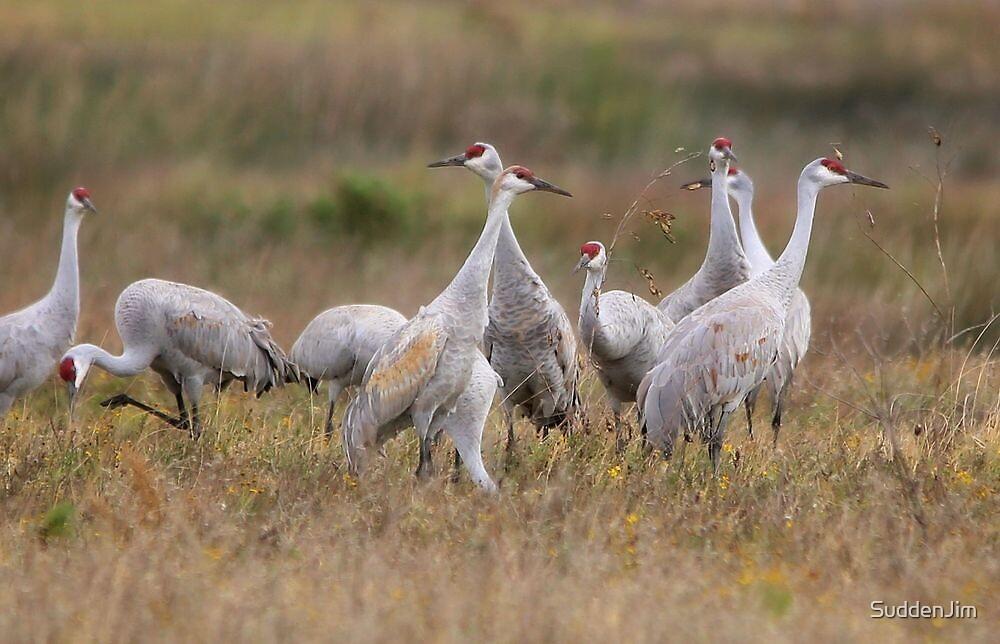Sand Hill Cranes Return by SuddenJim