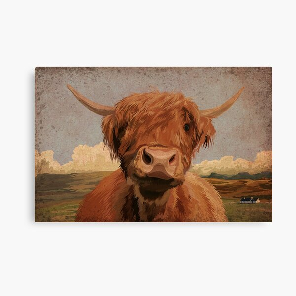 LARGE A3 SIZE QUALITY CANVAS PRINT BEAUTIFUL HIGHLAND COW