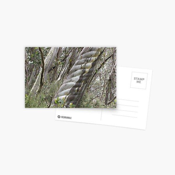 Australian Alpine Treasures, Thredbo NSW Postcard