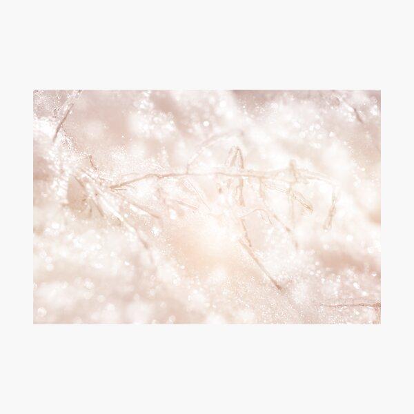 Crystal Wonderland Photographic Print