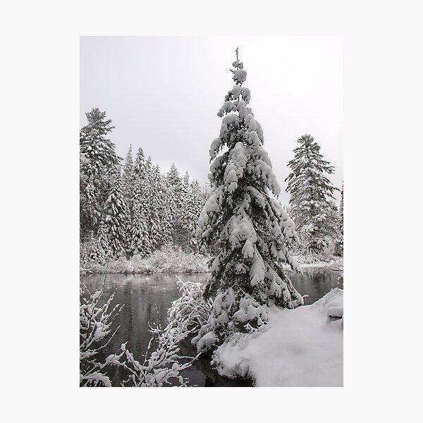Winter in Algonquin  Photographic Print