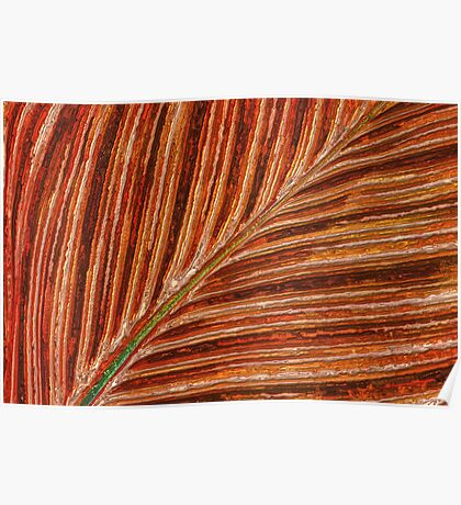 Abstract Canna Leaf Poster