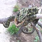 Colourful Chameleon Wrapped Around A Branch by taiche