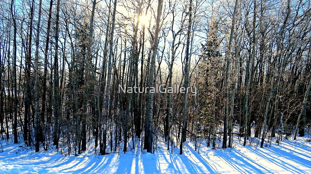 Snow Scene by NaturalGallery