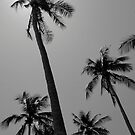 Palms of Paradise by Paige
