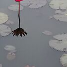 Lonesome lotus by Paige