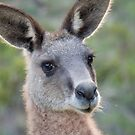 Digie the forester kangaroo  by Ron Co