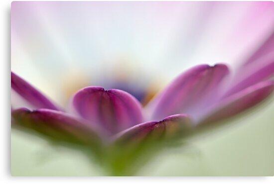 Purple Petals by Susan Tong