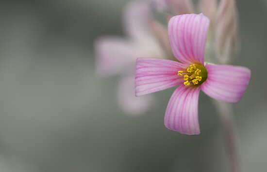 Spring Flower by Susan Tong