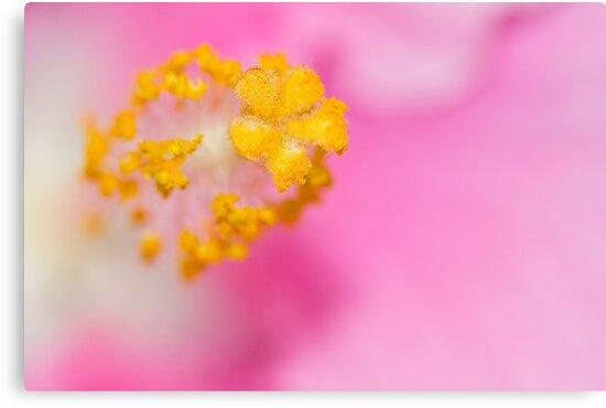 Pink by Susan Tong