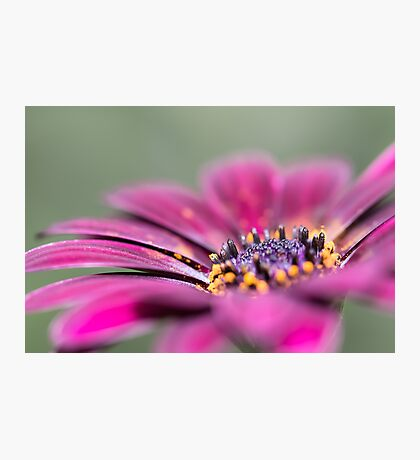 Sunny Bloom Photographic Print