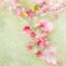 Spring Flight by Marilyn Cornwell