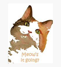 Meow's It Going Photographic Print
