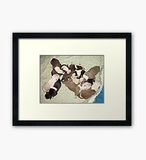 Wonder's New Puppies - One Day Old Framed Print