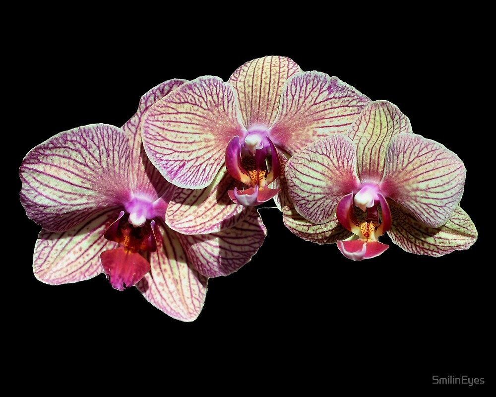Orchid Flower Trio by SmilinEyes