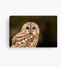 Tawny Owl portrait Canvas Print