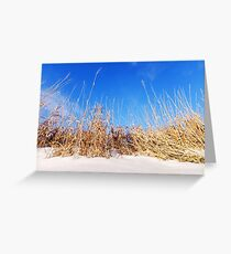 Prairie Grass in Winter Greeting Card