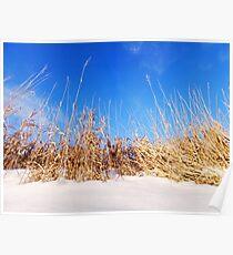 Prairie Grass in Winter Poster
