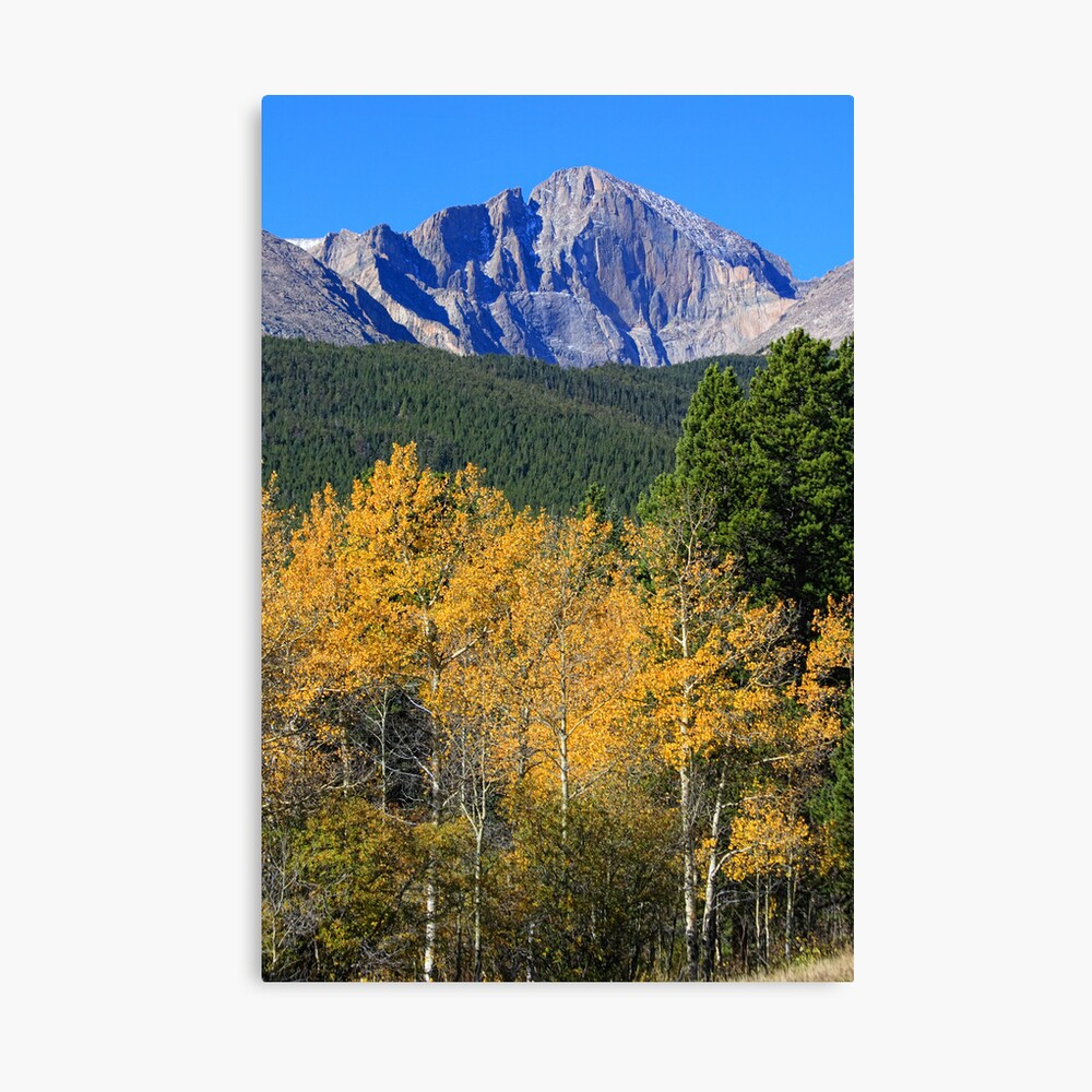 Autumn Aspens and Longs Peak Canvas Print
