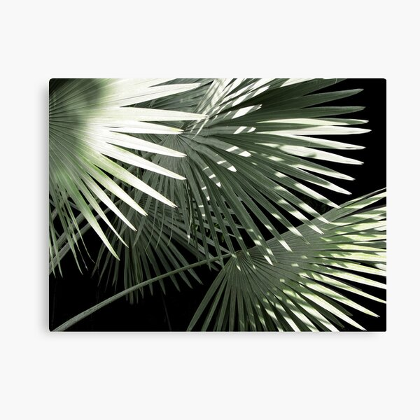 Shapes of Hawai'i Canvas Print