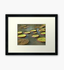 Water-lily Framed Print