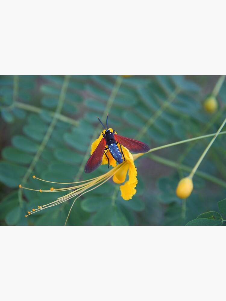 Caribbean Nectar Lover by hoxtonboy