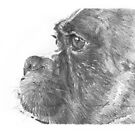 Boxer dog drawing by Mike Theuer