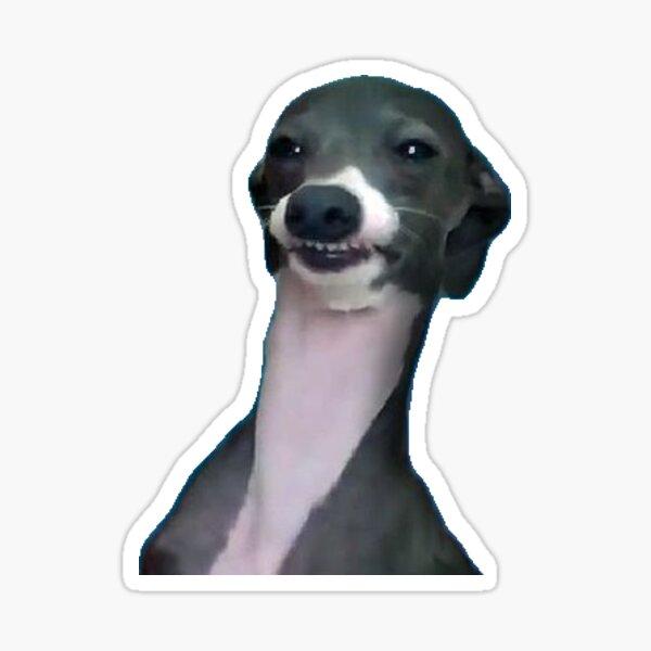 wyd dog um  Sticker