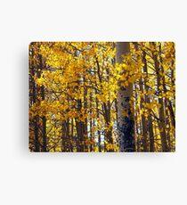 Colorado Aspen Trees in Fall Canvas Print