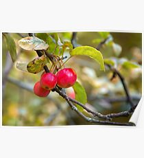 Autumn Berries Poster