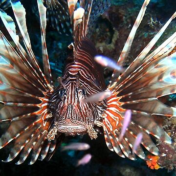 Caribbean Lion Fish guarding the Coral Reef by Scubagirlamy