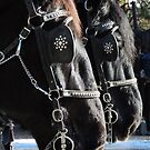 Percheron Pair by Betty  Town Duncan