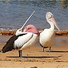 """Say Yes Darling"" ~ Australian Pelican's Mating Display by Robert Elliott"