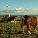 Les chevaux de St Mathieu by Jean-Luc Rollier